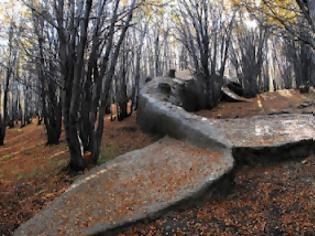 Φωτογραφία για Μια φάλαινα στο… δάσος!