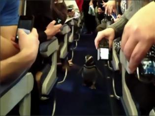 Φωτογραφία για Πιγκουίνοι βολτάρουν στο διάδρομο αεροπλάνου!