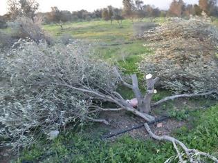 Φωτογραφία για Απίστευτο! Του έκανε παρατήρηση για την καταπάτηση της γης του κι αυτός του...έκοψε σύριζα όλα τα δέντρα!