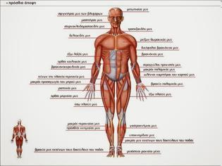 Φωτογραφία για Πως λειτουργεί το σώμα μου ?