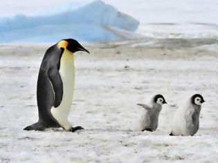 Φωτογραφία για 10 υπέροχοι μπαμπάδες στο ζωικό βασίλειο... [photos]