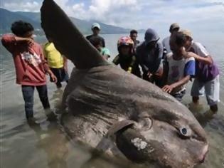 Φωτογραφία για Πήγαν για ψάρεμα και γύρισαν με ένα… τέρας