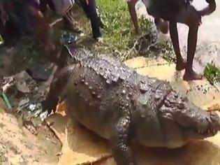 Φωτογραφία για Αυτό δεν το είχαμε ξαναδεί: Δείτε από τι πέθανε ένας Κροκόδειλος 100 ετών..