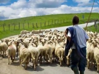 Φωτογραφία για Σοκάρει η μαρτυρία κτηνοτρόφου στην Εύβοια: Ήρθα τετ α τετ με...