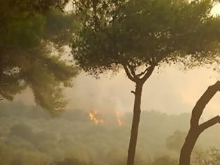 Φωτογραφία για ΖΑΚΥΝΘΟΣ: 5 φωτιές σε 1μιση ώρα! Όλοι μιλούν για εμπρησμό!!