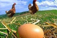 H πανεύκολη μέθοδος για να καταλάβεις αν τα αυγά είναι φρέσκα