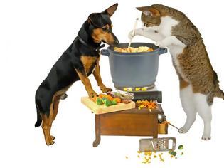 Φωτογραφία για Ειδικοί προειδοποιούν: Μην δίνετε ωμό κρέας στις γάτες και τους σκύλους σας