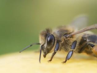 Φωτογραφία για Ηράκλειο: Γυναίκα πέθανε από το τσίμπημα μέλισσας