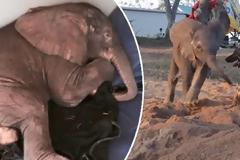 Αυτό το άρρωστο ελεφαντάκι έμεινε εντελώς μόνο όταν η αγέλη του το εγκατέλειψε. Μέχρι που εμφανίστηκε ο πιο «αταίριαστος» φίλος