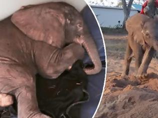 Φωτογραφία για Αυτό το άρρωστο ελεφαντάκι έμεινε εντελώς μόνο όταν η αγέλη του το εγκατέλειψε. Μέχρι που εμφανίστηκε ο πιο «αταίριαστος» φίλος