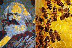 Η μέλισσα και ο αρχιτέκτονας