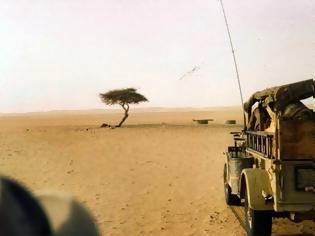 Φωτογραφία για Η θλιβερή ιστορία του πιο μοναχικού δέντρου