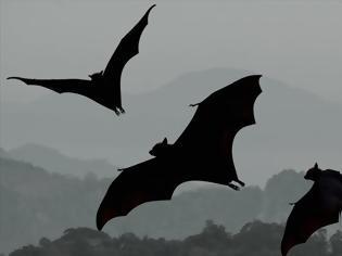 Φωτογραφία για Η κλιματική αλλαγή διαταράσσει τον κύκλο μετανάστευσης των νυχτερίδων