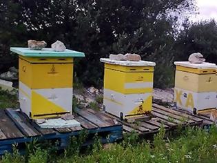 Φωτογραφία για Έκλεβε κυψέλες μελισσών στην Εύβοια