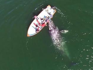 Φωτογραφία για Ήλπιζαν να συναντήσουν μια φάλαινα, αλλά να ζήσουν κάτι τέτοιο, ούτε στα πιο τρελά όνειρα τους... [video]