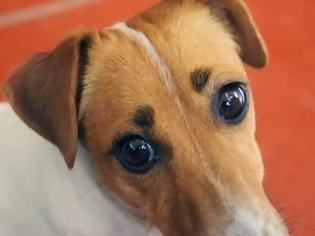 Φωτογραφία για ΣΟΚ: Σκυλίτσα γέννησε... άνθρωπο - ΠΡΟΣΟΧΗ: Ανατριχιαστικές φωτογραφίες