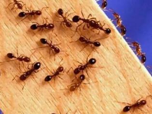 Φωτογραφία για Πώς να κρατήσετε μακριά τα μυρμήγκια που εμφανίζονται την άνοιξη