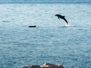 Φωτογραφία για Τα δελφίνια υποδέχτηκαν τους ιστιοπλόους στην Πάτρα