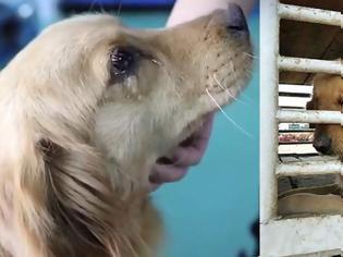 Φωτογραφία για Μας ράγισε την καρδιά: Σκύλος κλαίει μετά την διάσωσή του από αγορά κρέατος στην Κίνα