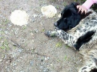 Φωτογραφία για Συνεχίζονται οι θανατώσεις ζώων στις Ερυθρές