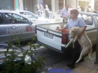Φωτογραφία για Στους δρόμους οι φιλόζωοι του Αγρινίου – Αναλαμβάνουν δράση!