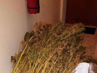 Φωτογραφία για Εργαστήριο υδροπονικής κάνναβης σε διαμέρισμα τής Κυψέλης