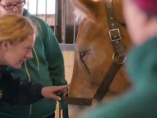 Φωτογραφία για Αυτό το άλογο πήγαινε για σφαγή - Όταν όμως το κοίταξαν στα μάτια, πραγματικά τα έχασαν… [video]