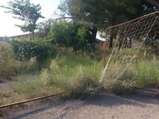 Φωτογραφία για Ζούγκλα από χορτάρια το γήπεδο Ερυθρων Αττικης [photos]