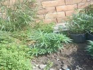 Φωτογραφία για 55χρονος καλλιεργούσε οκτώ δενδρύλλια κάνναβης στο σπίτι του