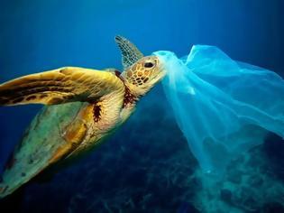 Φωτογραφία για Ταϊλάνδη: Θύμα των πλαστικών προστατευόμενο είδος θαλάσσιας χελώνας