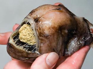 Φωτογραφία για Τα πιο παράξενα πλάσματα που έχουν βρεθεί στην θάλασσα!
