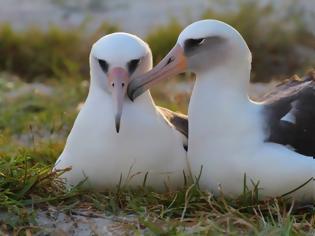 Φωτογραφία για Το μεγαλύτερο σε ηλικία πουλί είναι 64 ετών και γεννά ακόμα αυγά!