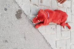 Ασυνείδητοι έβαψαν κουτάβι με κόκκινη βαφή μαλλιών