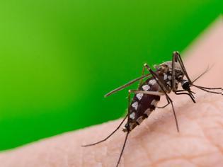 Φωτογραφία για Ιός Δυτικού Νείλου: Τρεις θάνατοι και 60 κρούσματα - Συναγερμός για την επιδημία