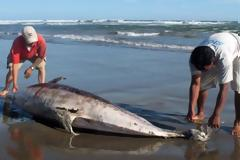 Νεκρό δελφίνι ξεβράστηκε στη Σκύρο
