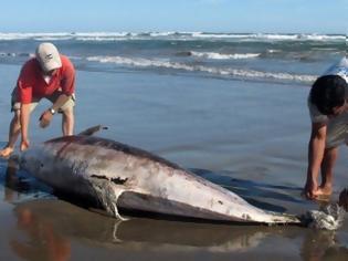 Φωτογραφία για Νεκρό δελφίνι ξεβράστηκε στη Σκύρο