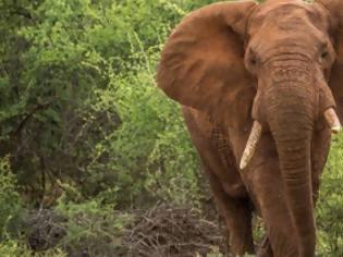 Φωτογραφία για 12 Αυγούστου: Παγκόσμια Ημέρα του Ελέφαντα