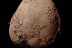 Αυτή η πατάτα κοστίζει 1.000.000 ευρώ!