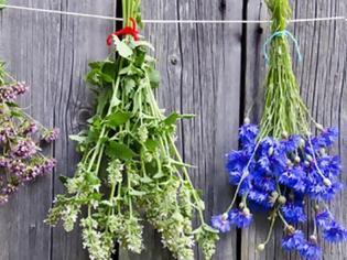 Φωτογραφία για 5 βότανα που κόβουν την όρεξη και βοηθούν στο αδυνάτισμα