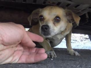 Φωτογραφία για Αυτό το σκυλάκι είχε χαθεί στην πόλη για μέρες – Δείτε στο 4:30 την στιγμή της επανασύνδεσης με τον ιδιοκτήτη του [video]