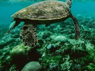 Φωτογραφία για Πάνω από τις μισές χελώνες στους ωκεανούς έχουν φάει πλαστικό