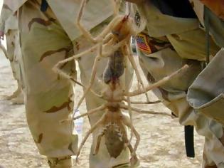 Φωτογραφία για ΣΟΚΑΡΙΣΤΙΚΕΣ ΕΙΚΟΝΕΣ: Τον δάγκωσε αράχνη και δεν έδωσε σημασία…ΔΕΙΤΕ πως έγινε όμως μέσα σε 9 μέρες! [photos]