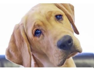 Φωτογραφία για Γνωρίζετε γιατί οι σκύλοι γέρνουν το κεφάλι τους όταν τους μιλάμε;