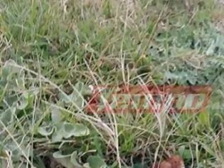Φωτογραφία για Απίστευτο περιστατικό στην Δυτική Ελλάδα – Ανήλικος βρήκε χειροβομβίδα και πήγε να την πετάξει
