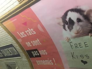 Φωτογραφία για Ακτιβιστές στο Παρίσι ζητούν να μπει «τέλος» στη «σφαγή» των αρουραίων