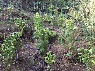 Φωτογραφία για Φυτεία με 236 ''ορφανά'' δενδρύλλια στη Μεσσηνία (ΦΩΤΟ)
