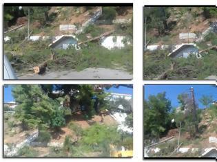 Φωτογραφία για Καταγγέλλει ο ΠΑΝΑΓΙΩΤΗΣ ΣΤΑΪΚΟΣ: Έγκλημα η κοπή από την ρίζα 5 πεύκων στην Παραλία του ΑΣΤΑΚΟΥ