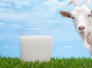 Φωτογραφία για Κατσικίσιο γάλα: Η Ελλάδα είναι πρώτη στην Ευρώπη σε πληθυσμό γιδιών