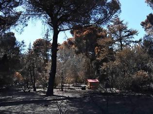 Φωτογραφία για Καθαρές οι μετρήσεις στις πυρόπληκτες περιοχές
