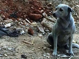 Φωτογραφία για Έβαψαν με μπλε μπογιά σκυλίτσα στην Κρήτη